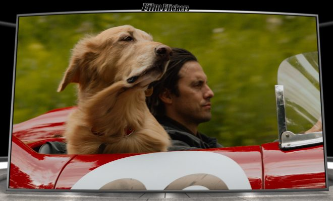 Image of Milo Ventimiglia as Denny Swift driving with dog