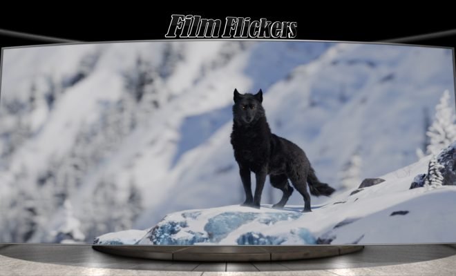 A black wolf in the mountains staring at the dog